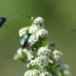 Животный мир и природа Зауралья (часть 10)